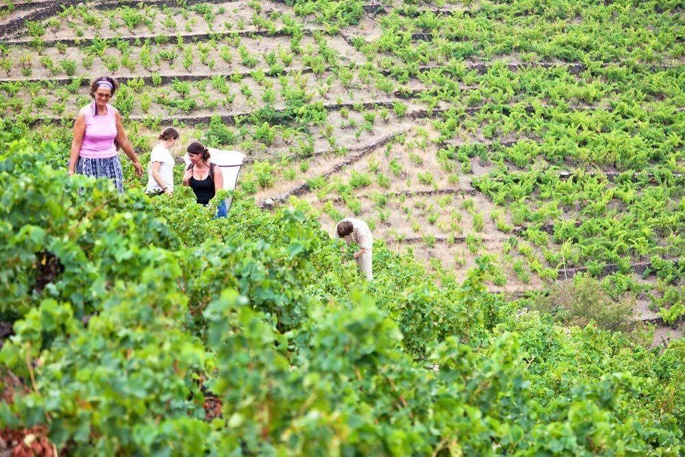 Quelle est la place de la femme dans le vignoble du Roussillon ?