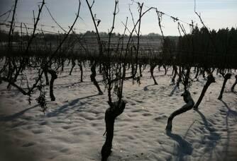 Les vignes du Domaine Les Roques de Cana sous la neige