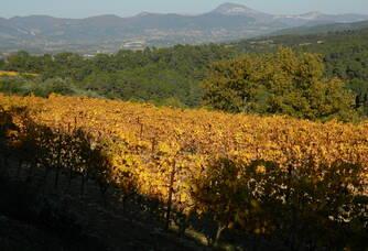 Vue du coteau du Domaine Eygyestre