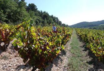 Travail dans les vignes au Domaine Eygyestre