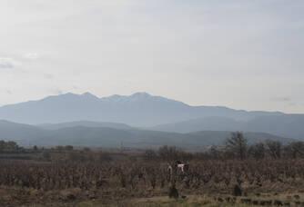 Jolie vue sur le domaine Puig-Parahÿ