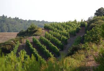 Vignoble de Mas Champart