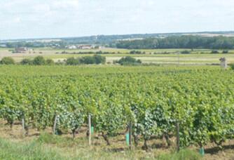 Vignoble du Domaine Grosbois
