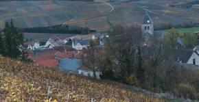 Champagne Marc(Champagne) : Visite & Dégustation Vin