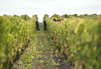 Au coeur des vignes du Domaine du Petit Clocher