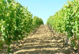 Au coeur des vignes du Vignoble Queyrens