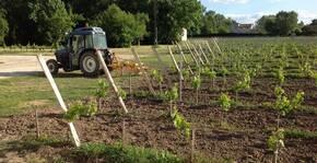 Nouvelles vignes du Château Bozelle