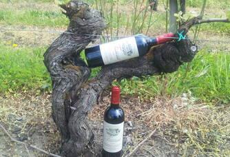 Vignoble du Château Fourcaud