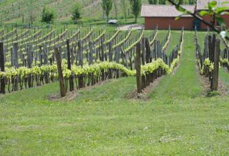 Vignoble du Domaine de Beyssac