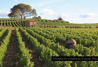 Au coeur des vignes du Château Cazal Viel