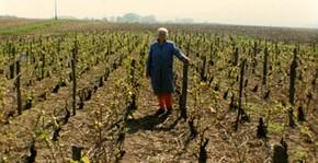 Les vignes du Champagne Henri Dechelle