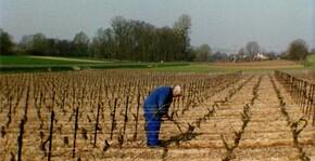 Les vignes du Champagne Henri Dechelle pendant l'hiver