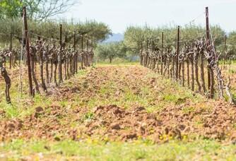 Les vignes du Domaine du Clos Gautier