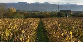Château De Merande(Savoie) : Visite & Dégustation Vin