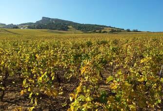 Le vignoble du Domaine du Roure