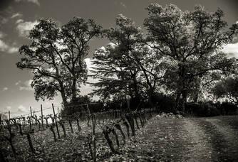 Les vignes du Domaine de la Dourbie