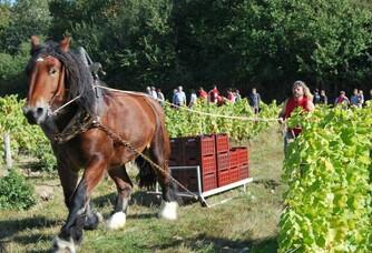 En plein coeur des vignes du Domaine des Pierres d'Aurèle
