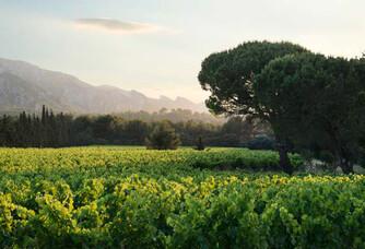 Vue sur les vignes du Château Romanin