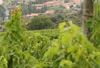 Les vignes du Domaine Les Vingt Citadelles