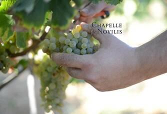Grappes de raisin de la Chapelle de Novilis