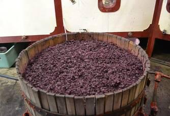 Vendanges aux Vignobles Saby