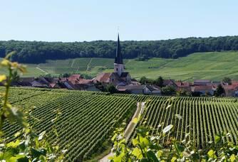 Chamery, notre village Premier Cru au coeur de la Montagne-de-Reims