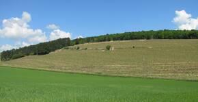 Domaine Thevenot le Brun(Bourgogne) : Visite & Dégustation Vin