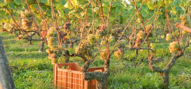 Bonnigal Bodet vignerons