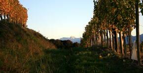 Domaine Castera(Sud-Ouest) : Visite & Dégustation Vin