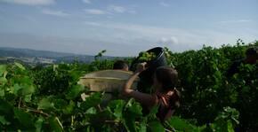 MAISON GUINOT(Languedoc) : Visite & Dégustation Vin