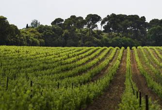 Vignobles Chateau de Serres