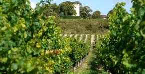 CHATEAU SAINCRIT(Bordeaux) : Visite & Dégustation Vin