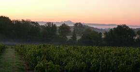 Domaine Christophe et Daniel Rampon(Beaujolais) : Visite & Dégustation Vin