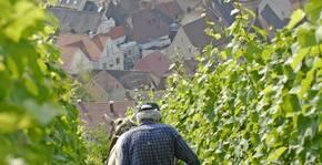 Domaine François Baur - Les vignes