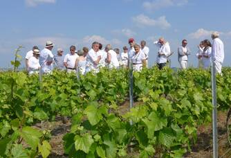 Garden Party, visite au coeur du vignoble