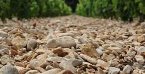 Domaine Chant des Loups(Vallée du Rhône) : Visite & Dégustation Vin
