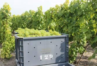 Chardonnay Caisse Vendanges 2013 Naveau 2