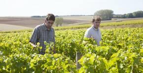 vignes, deux vignerons se promènent