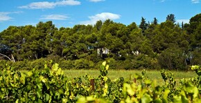 Château de Fourques(Languedoc) : Visite & Dégustation Vin