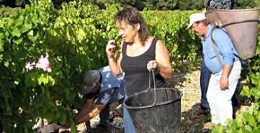 Domaine La Rune(Languedoc) : Visite & Dégustation Vin