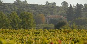 Château de la Curnière(Provence) : Visite & Dégustation Vin