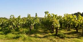 Domaine Jérémie Huchet(Loire) : Visite & Dégustation Vin