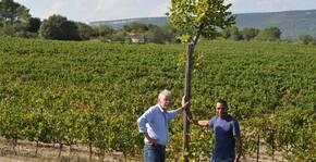 Domaine Zumbaum Tomasi(Languedoc) : Visite & Dégustation Vin