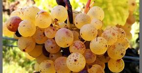 Château Lamothe(Bordeaux) : Visite & Dégustation Vin