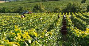 Champagne Gratiot-Delugny - Les vignes