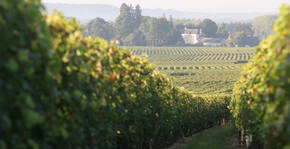 Château de Minière - La vigne