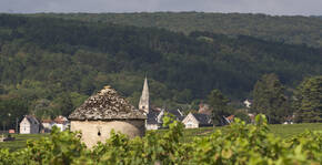 Domaine Jean-Marc Naudin - La vigne