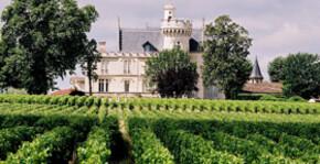 Château Pape Clément - Le vignoble
