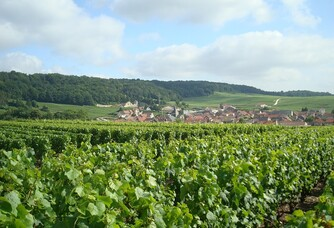 Champagne Fabrice Bertemes - Les vignes