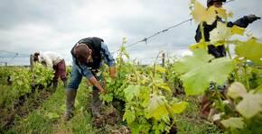 Domaine de l'Ouche Gaillard - Vigneron dans le vignoble